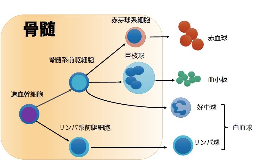 MPN-JAPAN